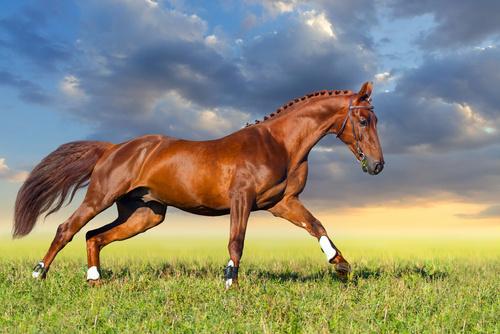Fototapeta 3D Koń Konie Zwierzęta Krajobraz