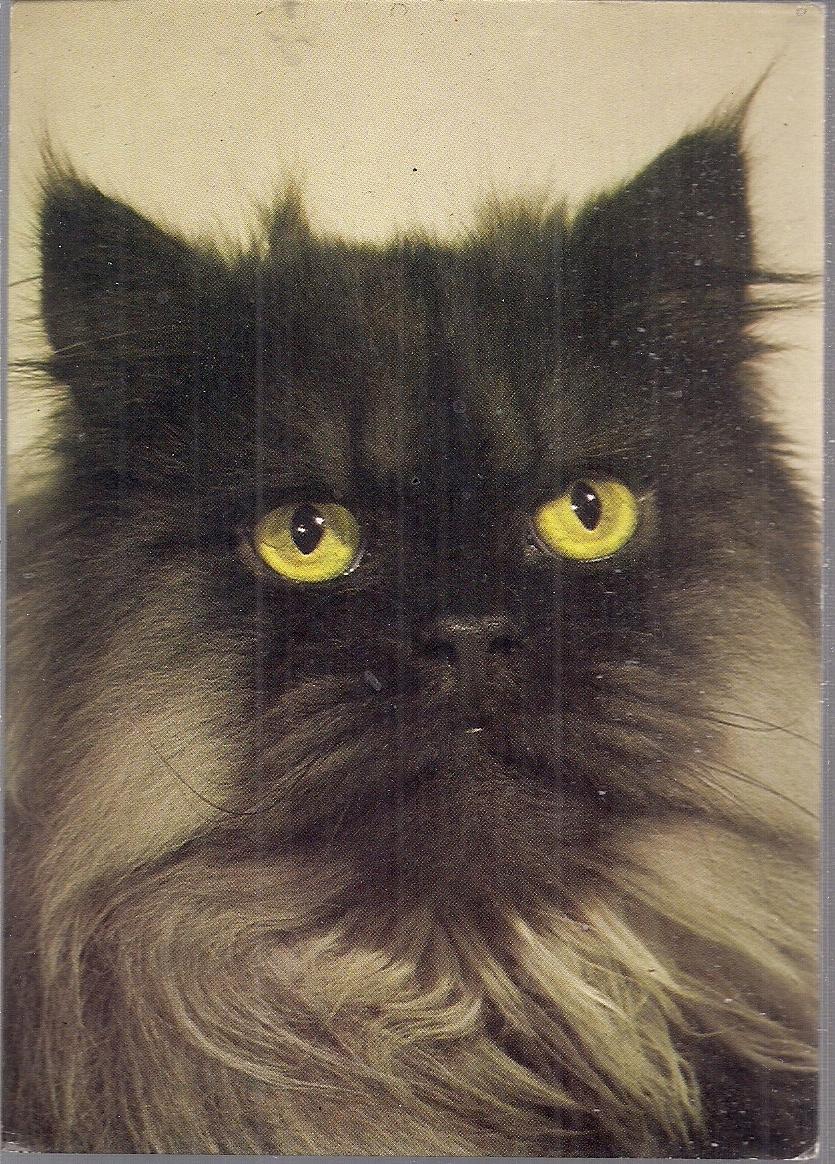 Pocztówka Kot Perski Czarny Kaw 74 7633405227 Oficjalne Archiwum