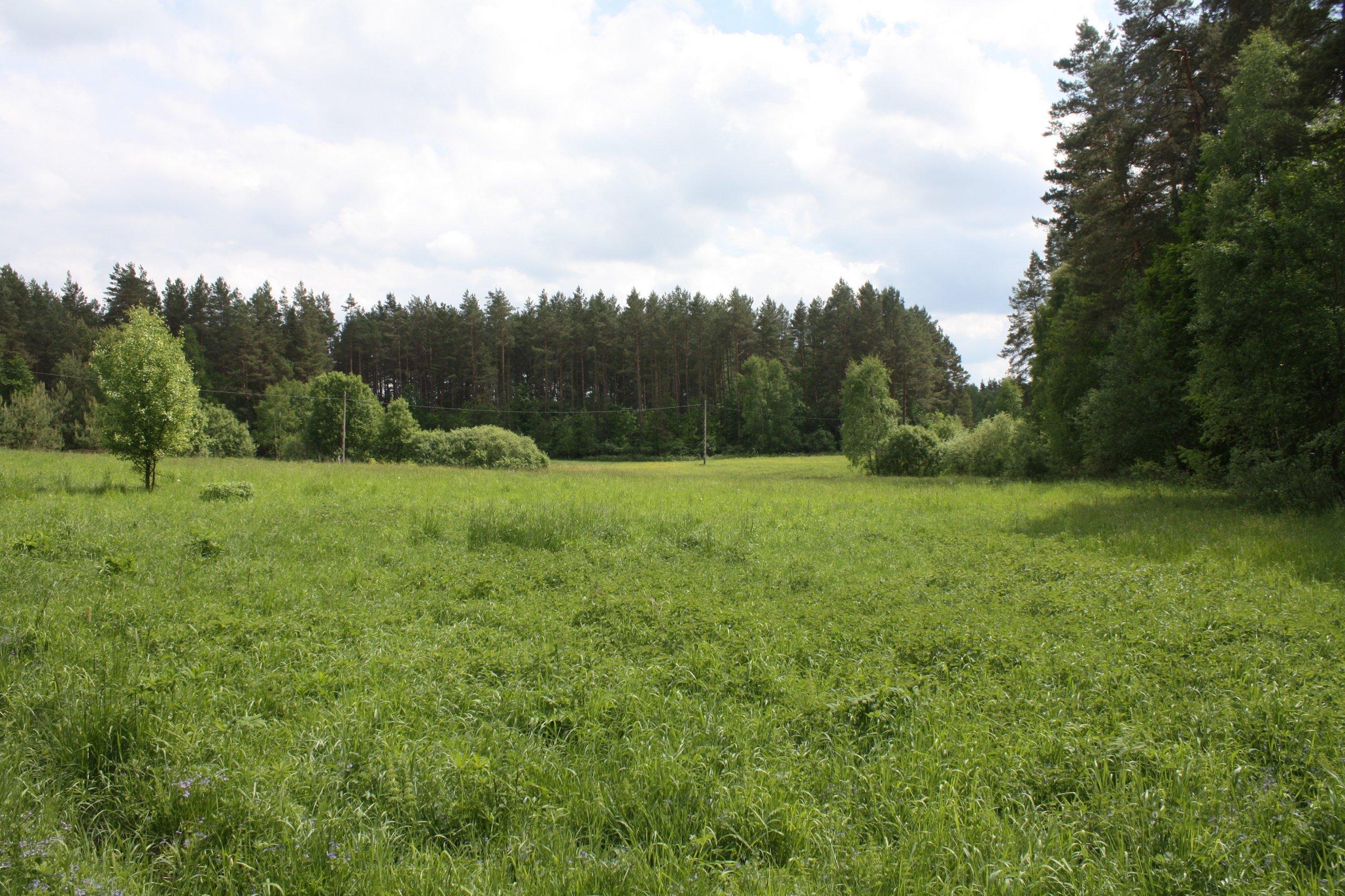 Siedlisko  w środku lasu na Mazurach