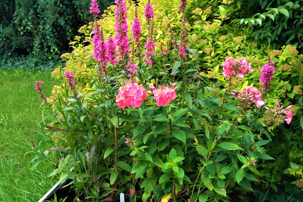 Každoročná záhrada
