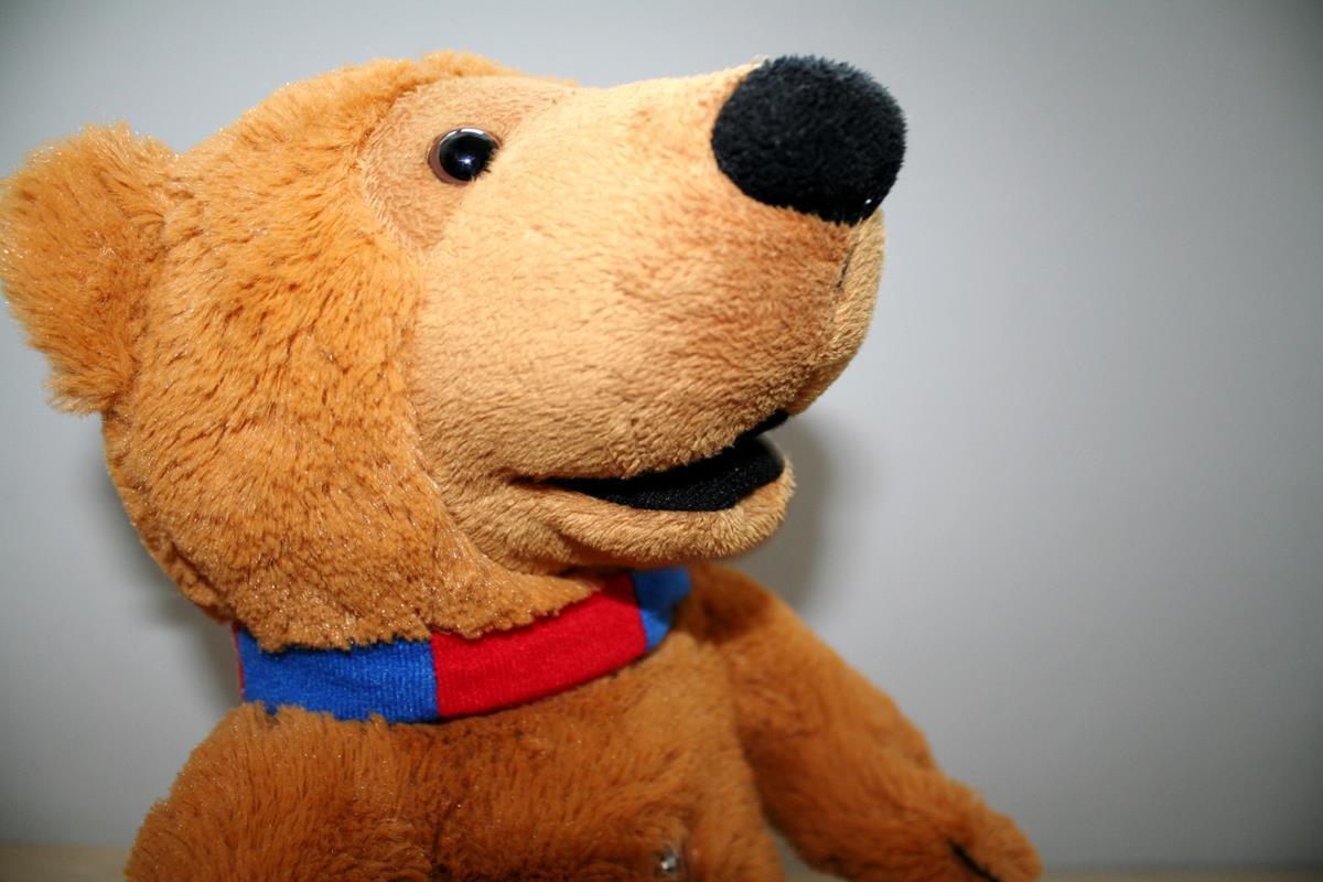 fotografia 5 Teddy bear close-up