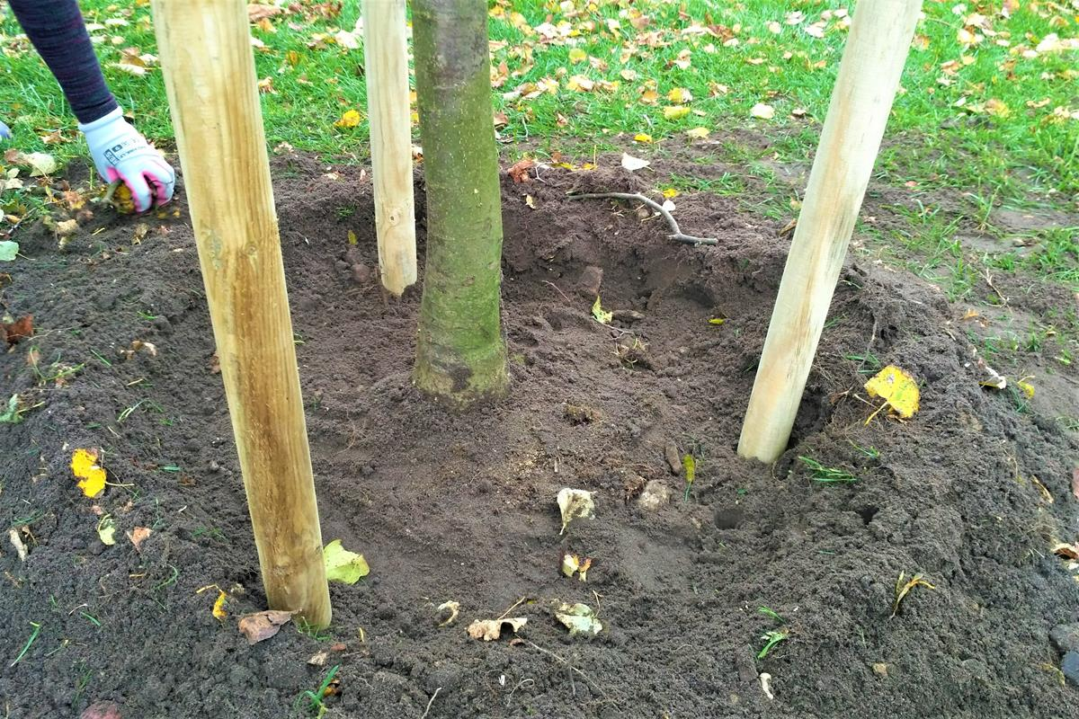 posilnenie stromu v zemi
