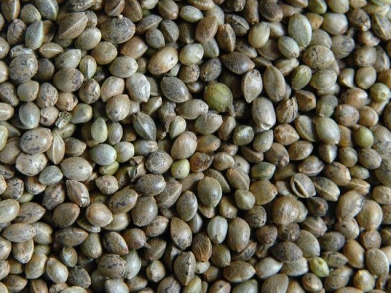 Селекционные купить конопли семена возбуждение конопля