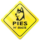 STICKER CHROŃ PUPILA * NAKLEJKA * PIES W AUCIE HIT