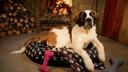 LEGOWISKA dla Psa kojec PONTON łapki XXXL115x90 R5 Kolor odcienie brązowego czarny odcienie szarości