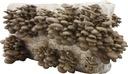 вёшенка + ШАМПИНЬОН мицелий брикета 15 кг вешенки