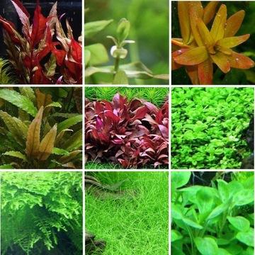 Набор растений простых в выращивании планы 3 + БЕСПЛАТНО доставка товаров из Польши и Allegro на русском