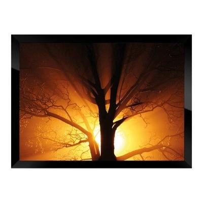 Фото-картина в плечо, Солнце в апельсинах за деревом