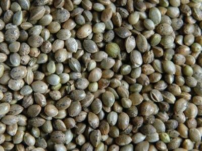 Семена конопли посевной 1кг находился важнейший торговый пункт Мануфактура