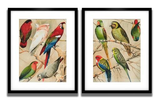 Komplet 2 Plakaty 40x50 Papugi