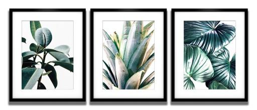 Plakaty Ramy 40x50 Rośliny